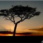 SunsetTanzania_AfricaSafari