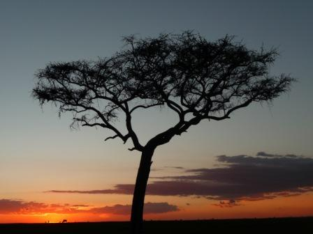Sunset in the Maasai Mara