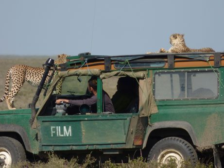 cheetah atop a National Geographic vehicle