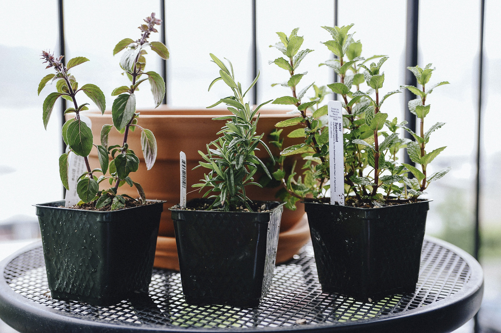 choosing the right herbs for your garden