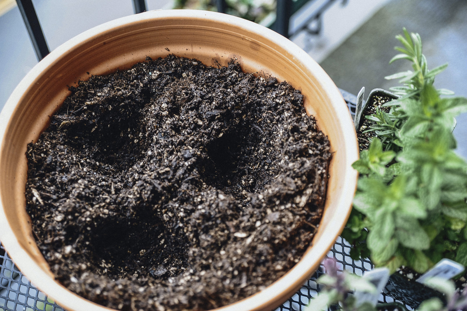 herb garden hole
