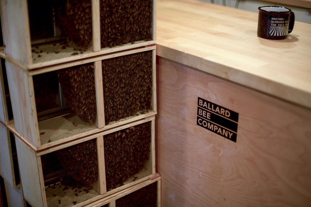 beekeeping seattle