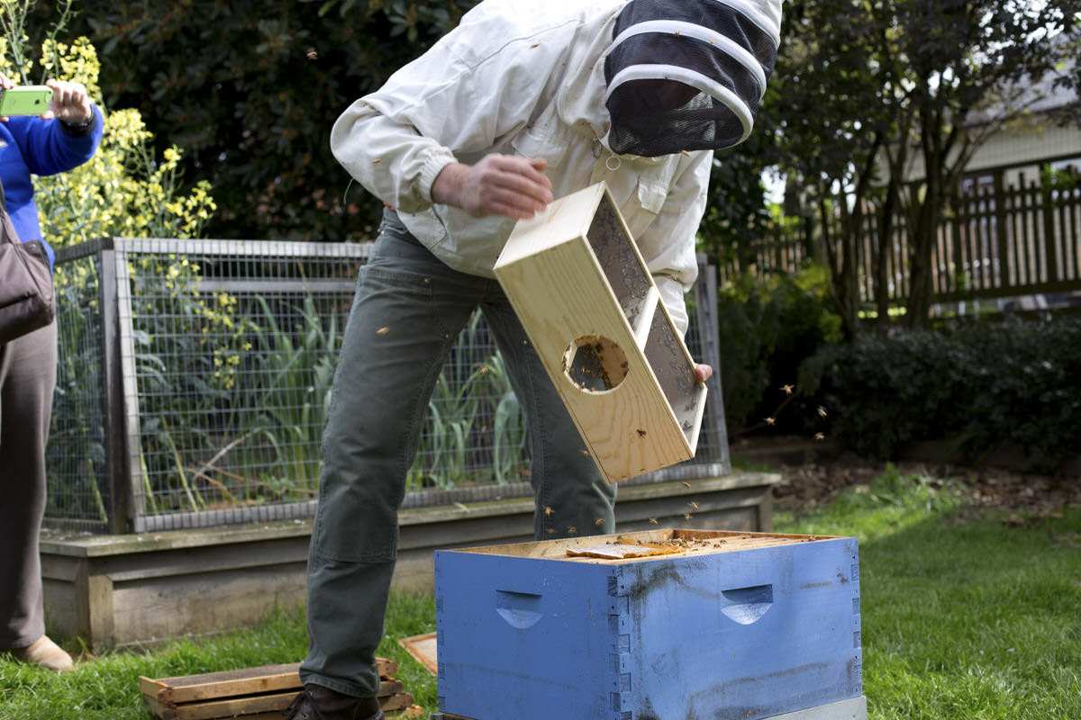 time to maintain bees
