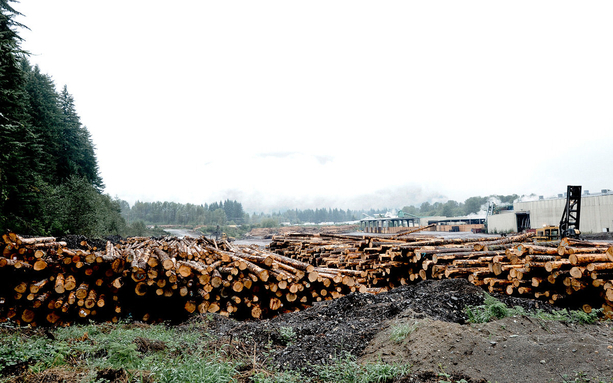 Green Lumber VS Kiln Dried Lumber