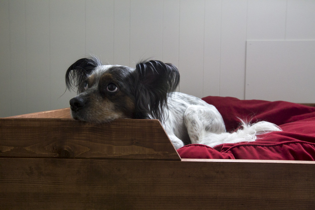 Diy dog bed how to make a dog bed dunn lumber dunndiy seattle dogbeddraper 03gasse solutioingenieria Gallery