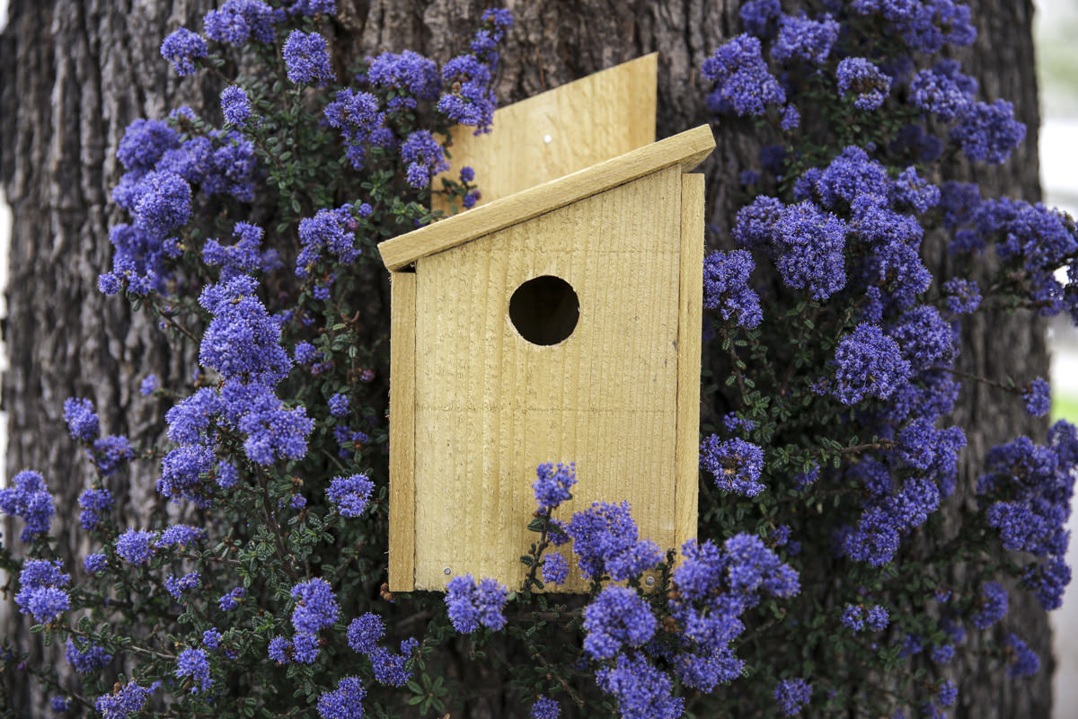 how to build a diy cedar birdhouse