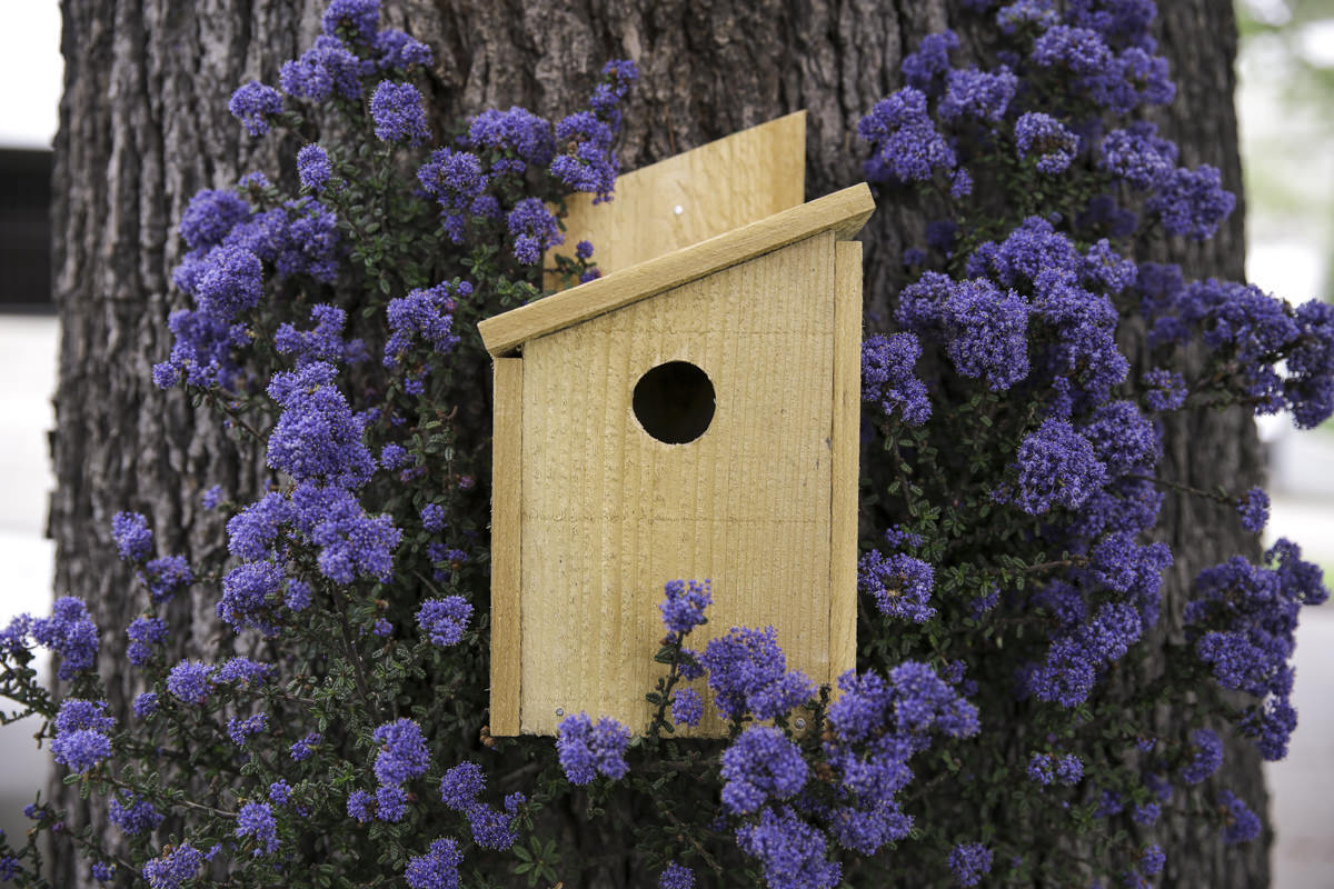 build a birdhouse at Seattle garden show