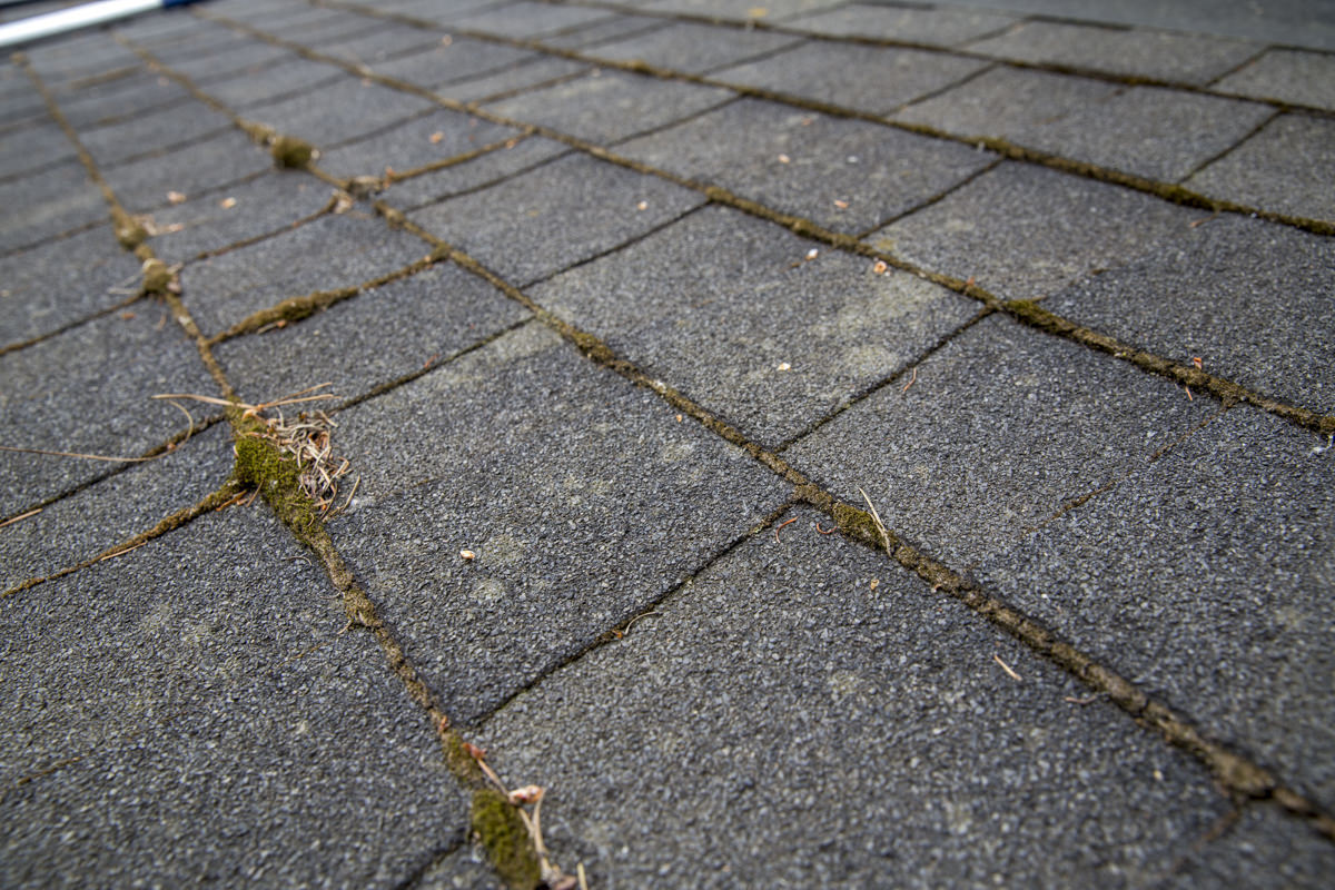 composite roof shingles with moss