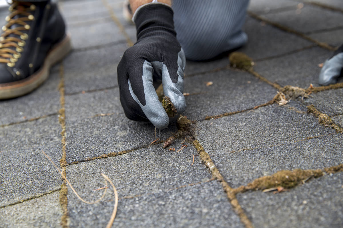 remove moss by hand
