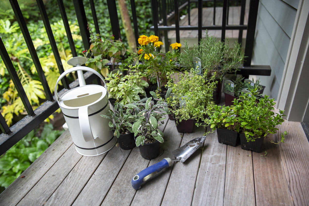 herbs on balcony