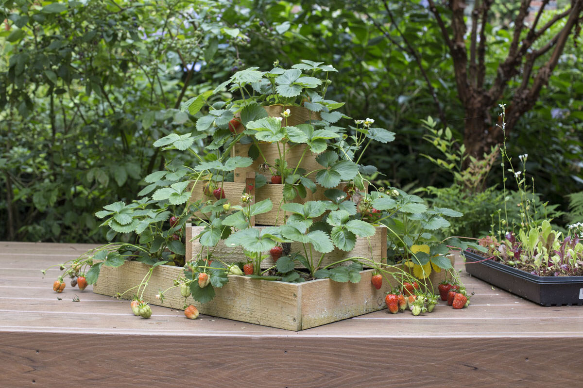strawberry planter at Seattle garden show