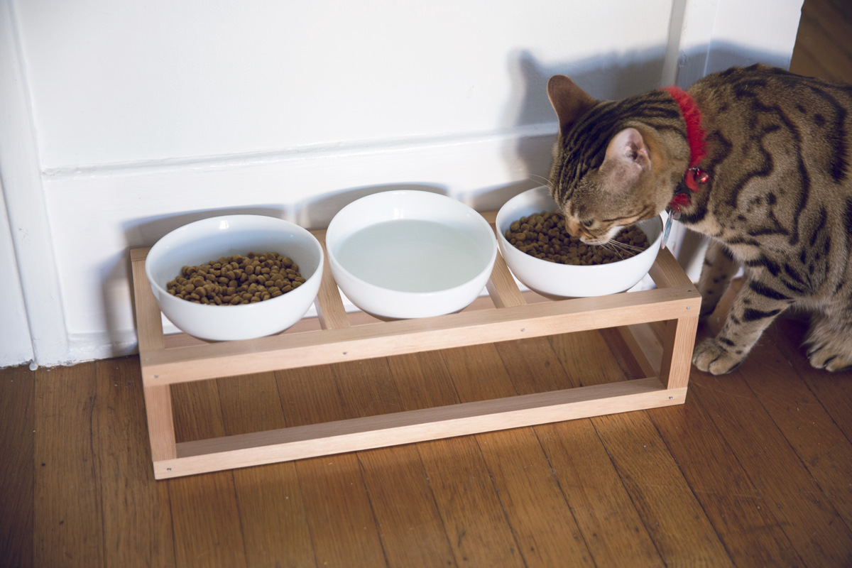 how to make a diy cat bowl stand