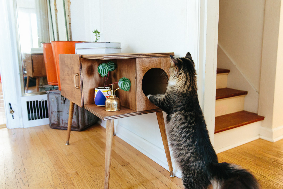 cat playing with litter box