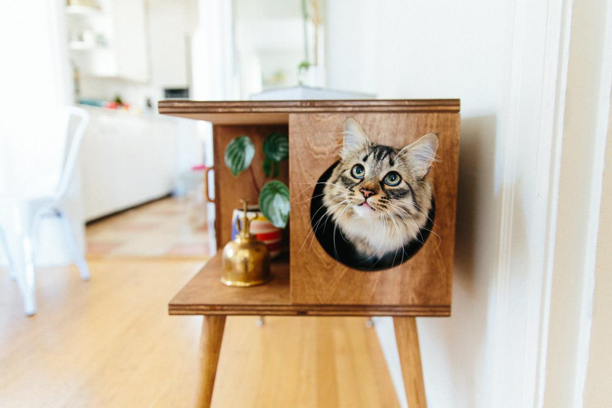 cat inside litter box