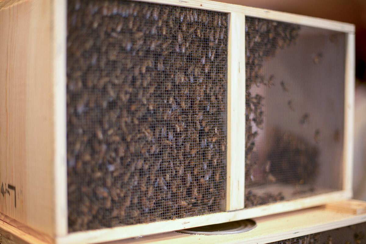 Dunn Diy Lumber Ballard Bees 01