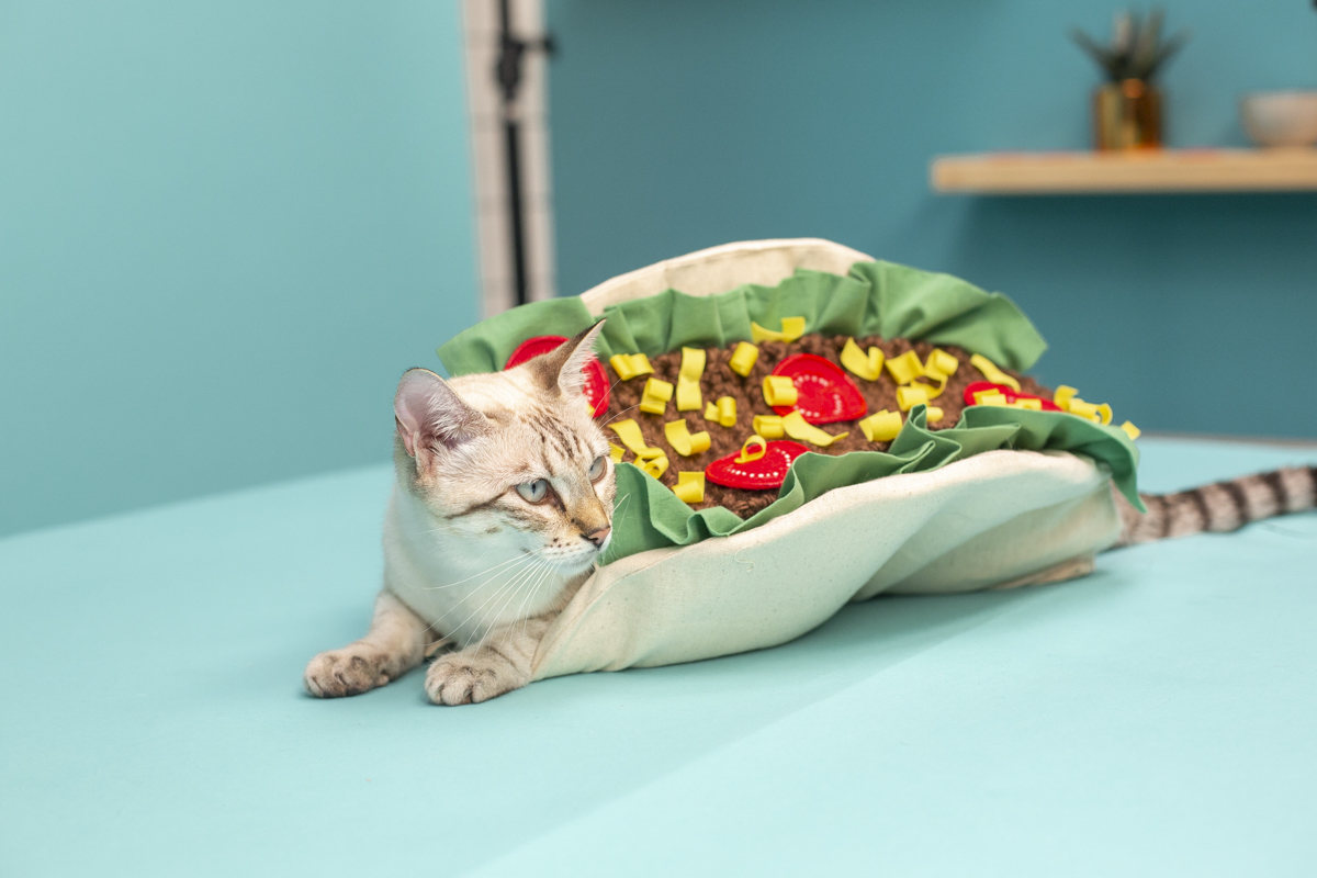 how to make a diy cat taco costume