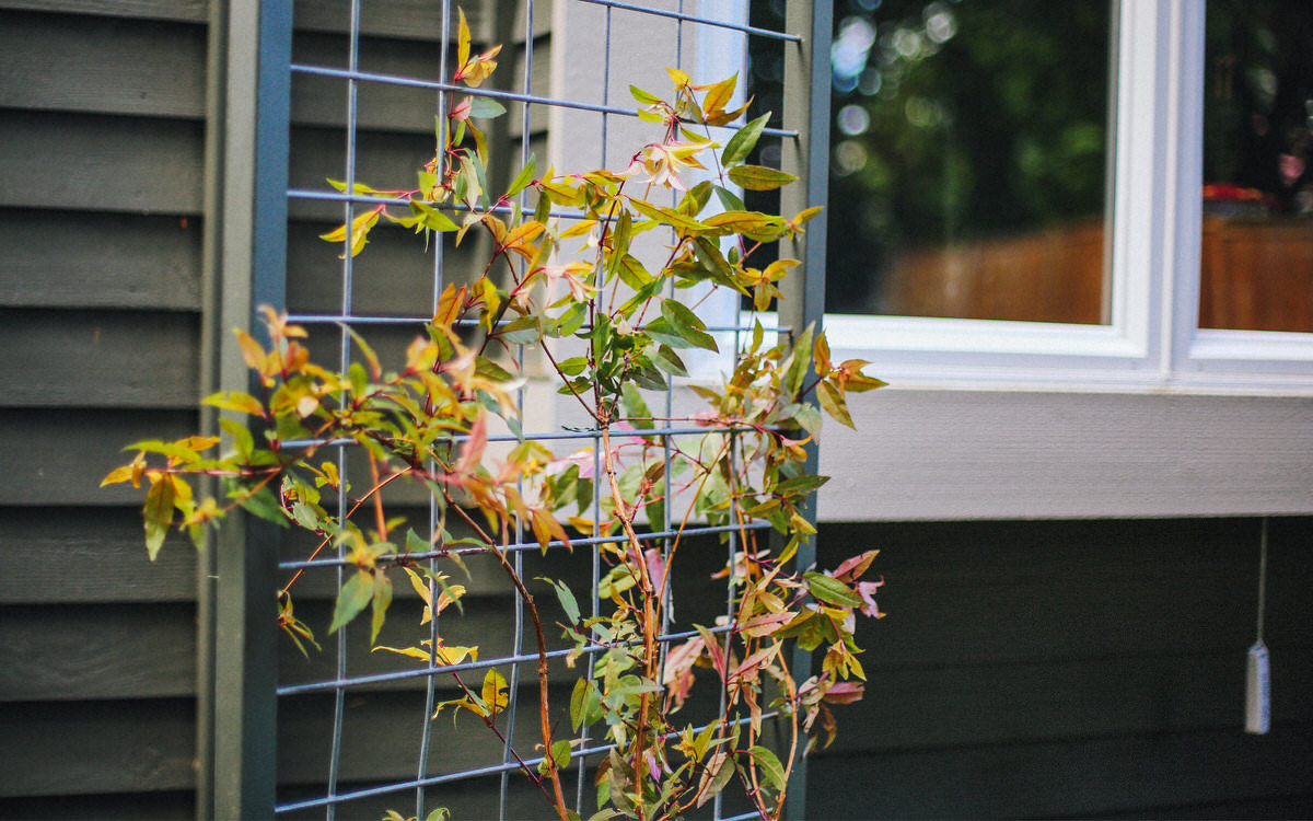 Dunn Diy Seattle Wa Trellis 29 1