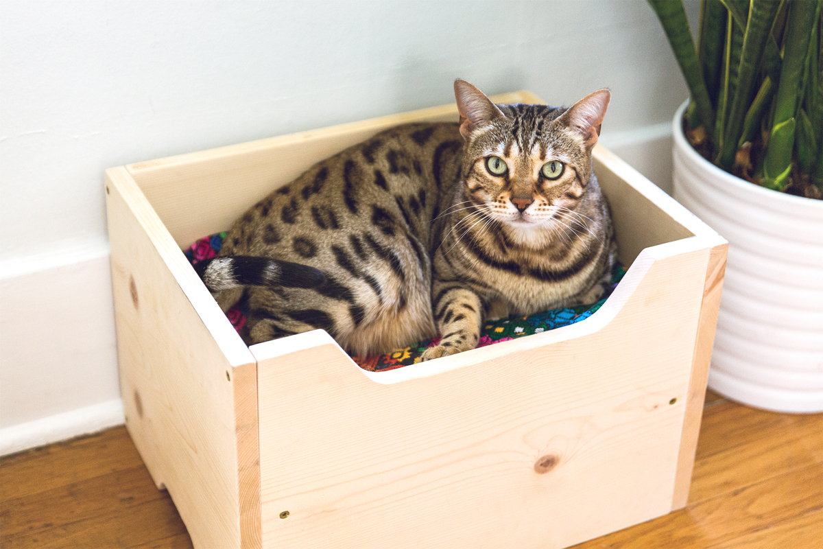 how to make a diy cat bed