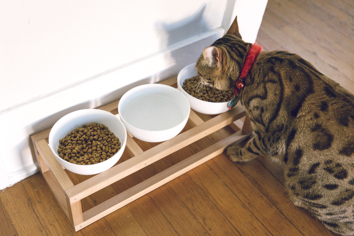 How to Make a DIY Pet Bowl Stand | Cat & Dog Bowl Stand DIY