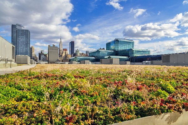 New York City Passes Bill Requiring Green Roofs on New Buildings