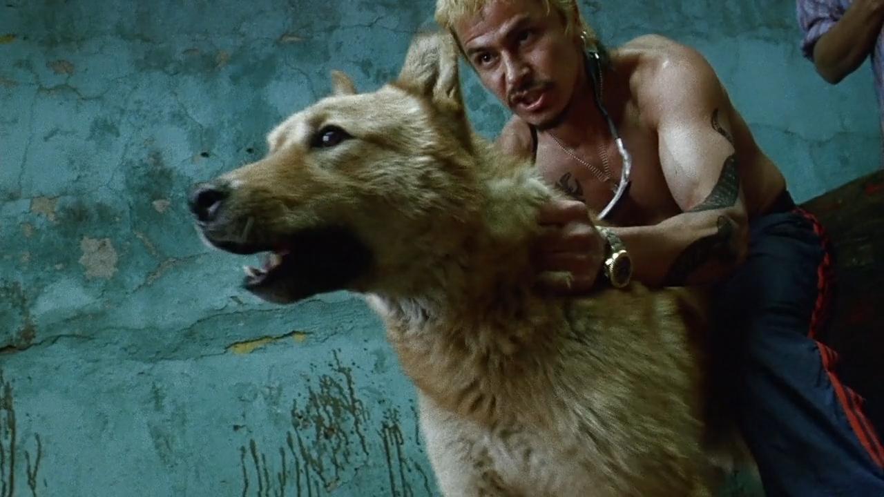 Dogfighting in <em>Amores Perros</em>
