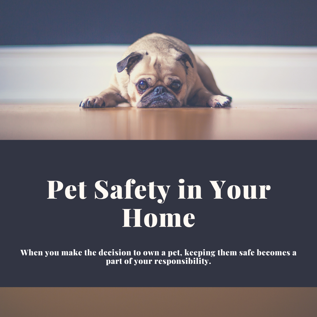 Pet Safety In Your Home