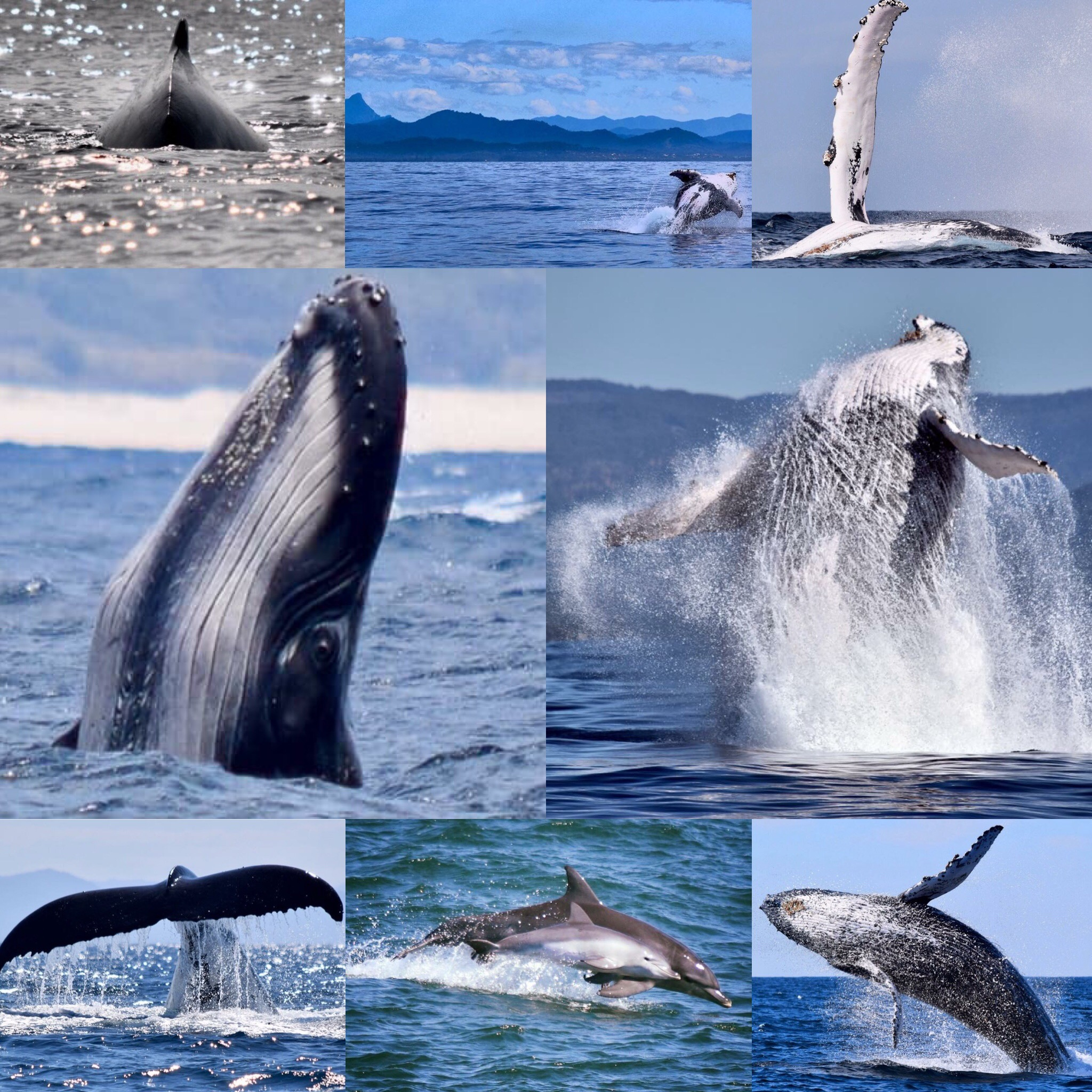 The best time of year for whale watching in Byron Bay