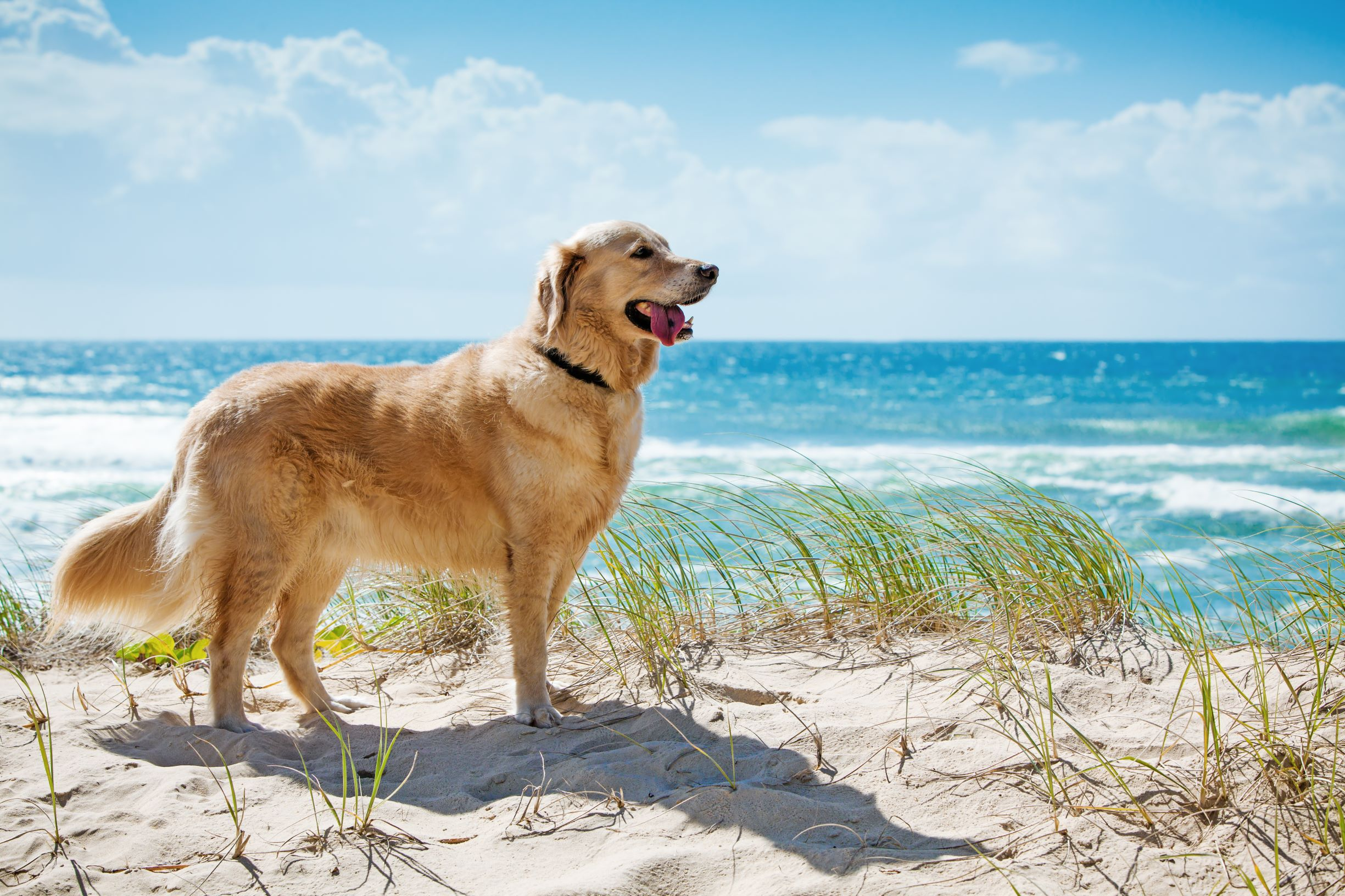 Family and Fur-Baby Friendly Things to do in Byron Bay
