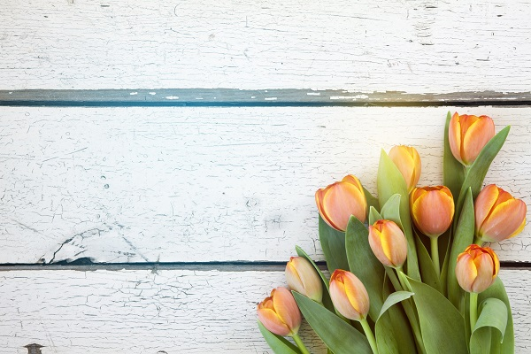 Spring has sprung – What's happening to the property market?