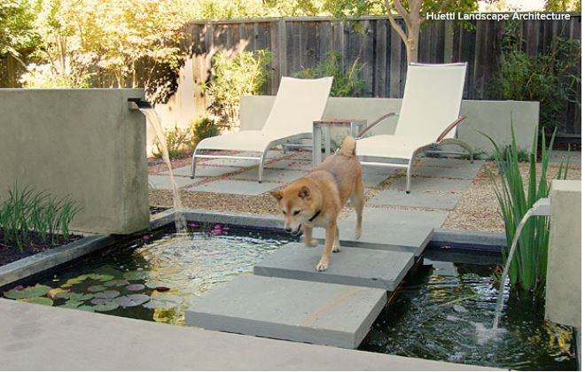 8 Garden Features to Delight Your Pooch