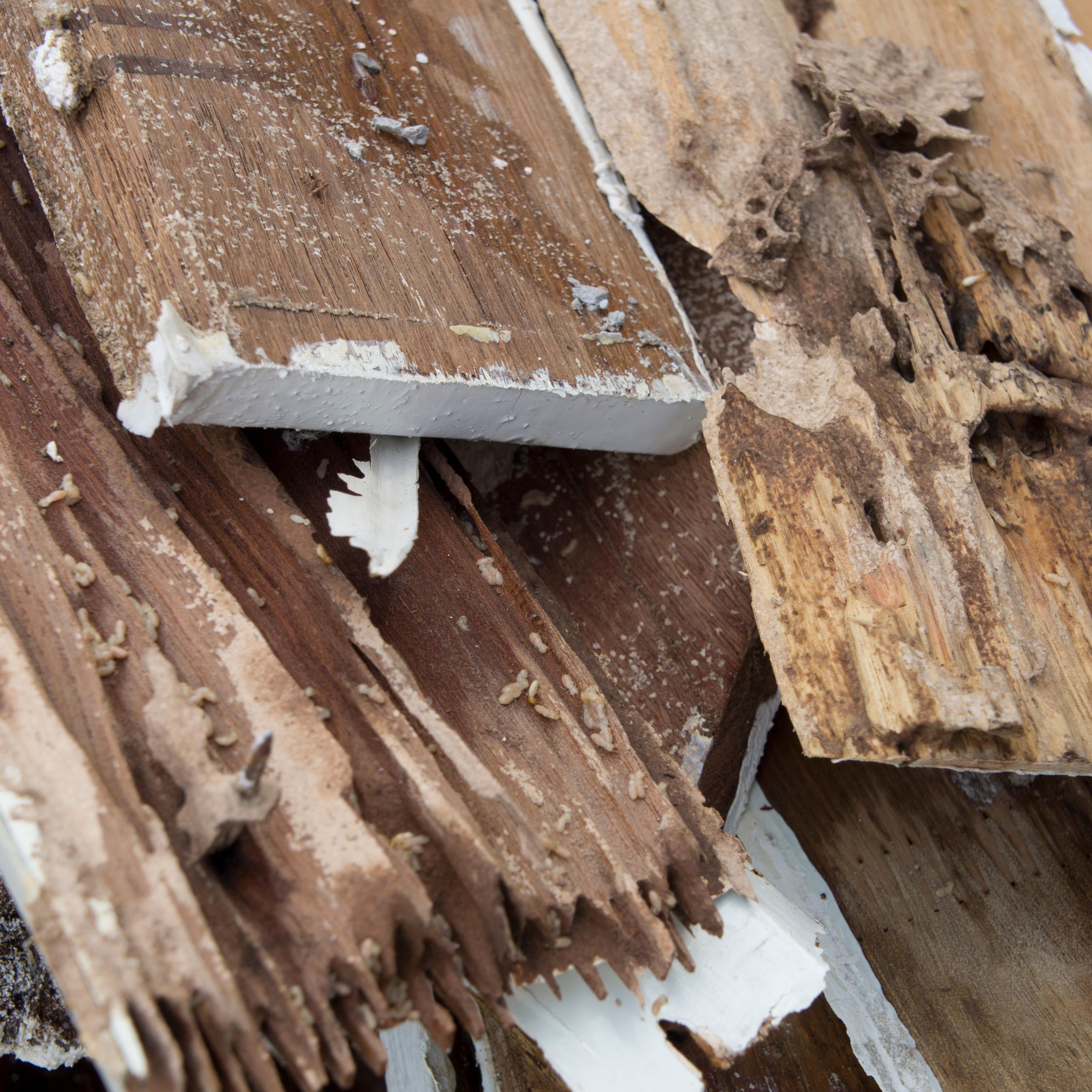 How to proactively protect your property from termites