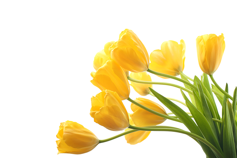 Looking at listing your property in Spring?