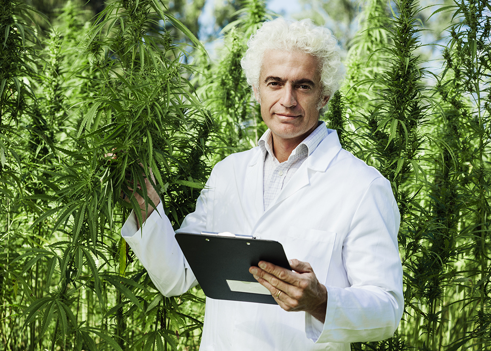 Image of male doctor examining marijuana plants to study the health effects of CBD
