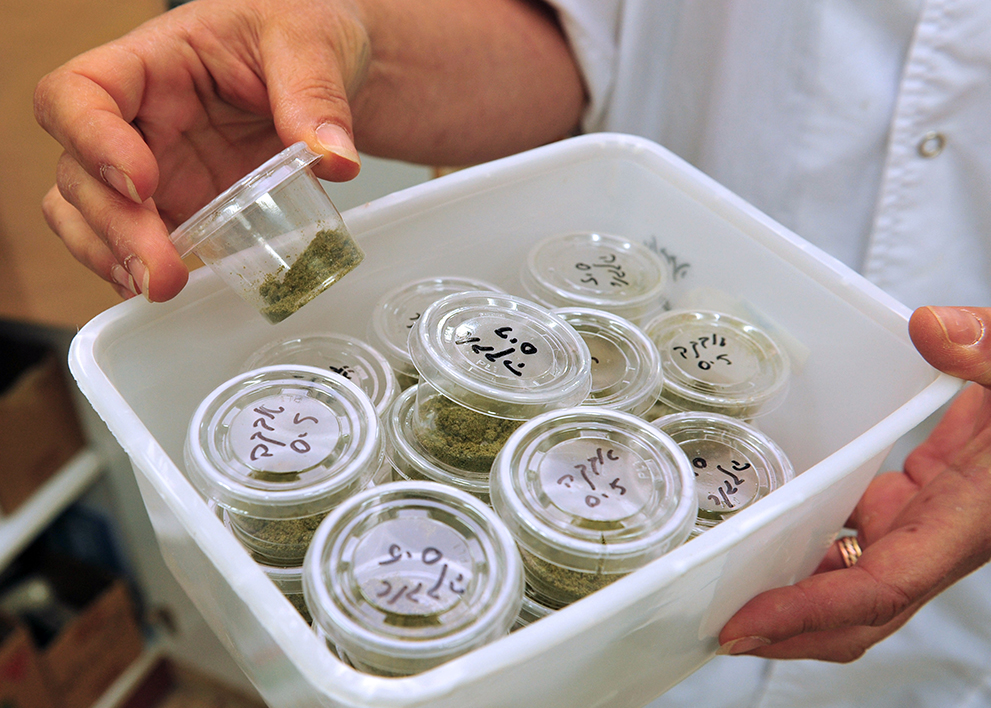Image of woman sorting marijuana samples. She has a marijuana industry job.