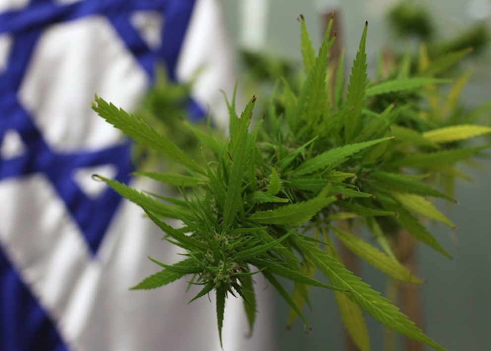 Image if Israel flag set in the foreground of a marijuana plant.