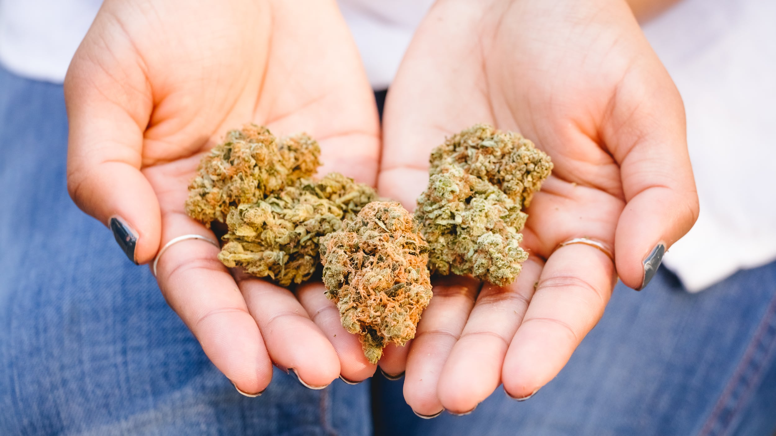 Nuggets of marijuana in hands.