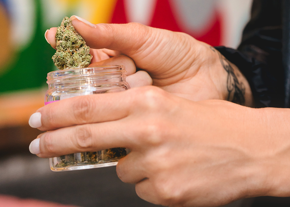 Woman holding a nug of marijuana over a jar.