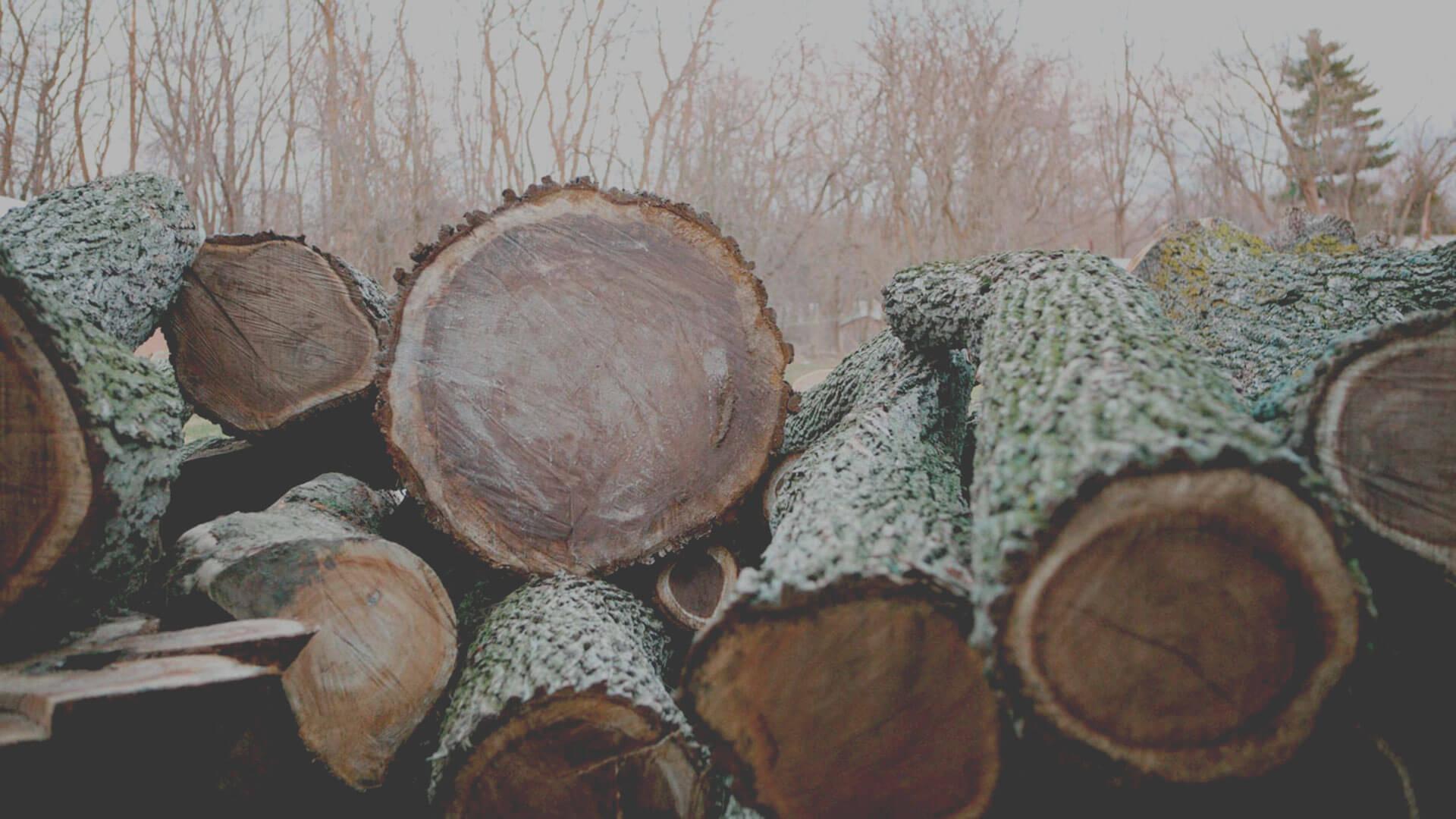Elko hardwoods uses salvaged urban trees