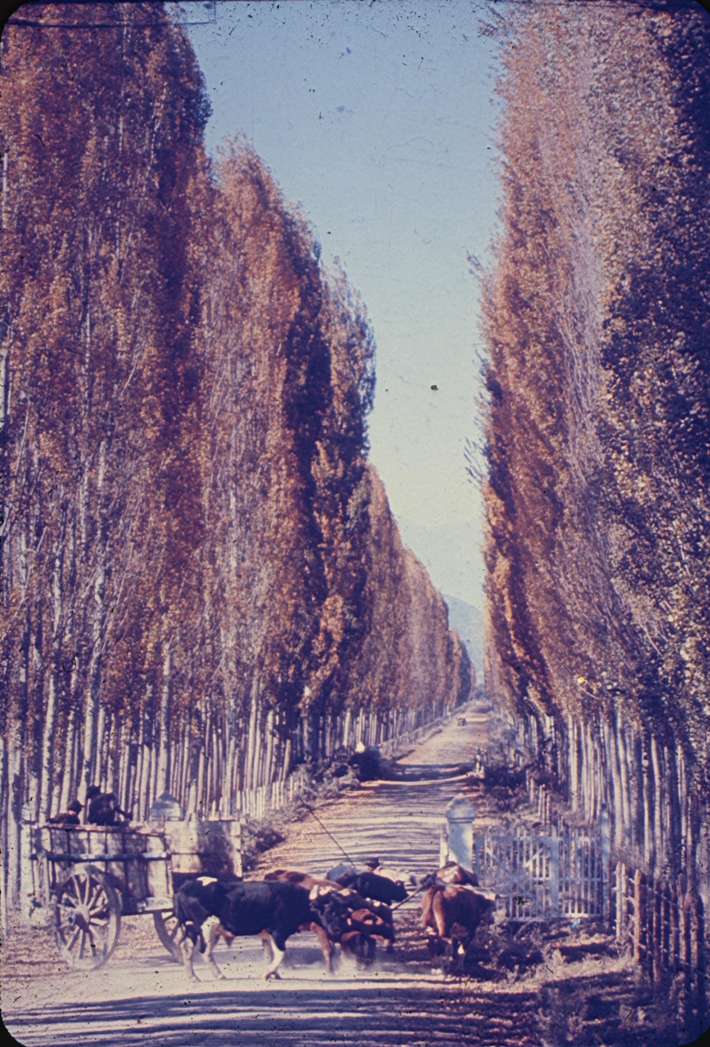 Enterreno - Fotos históricas de chile - fotos antiguas de Chile - Alameda en la Zona Central, 1960s