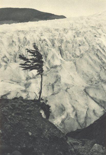 Enterreno - Fotos históricas de chile - fotos antiguas de Chile - Ventisquero Barros Arana en 1932