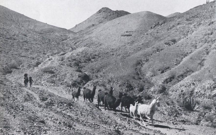 Enterreno - Fotos históricas de chile - fotos antiguas de Chile - Mamiña en 1959
