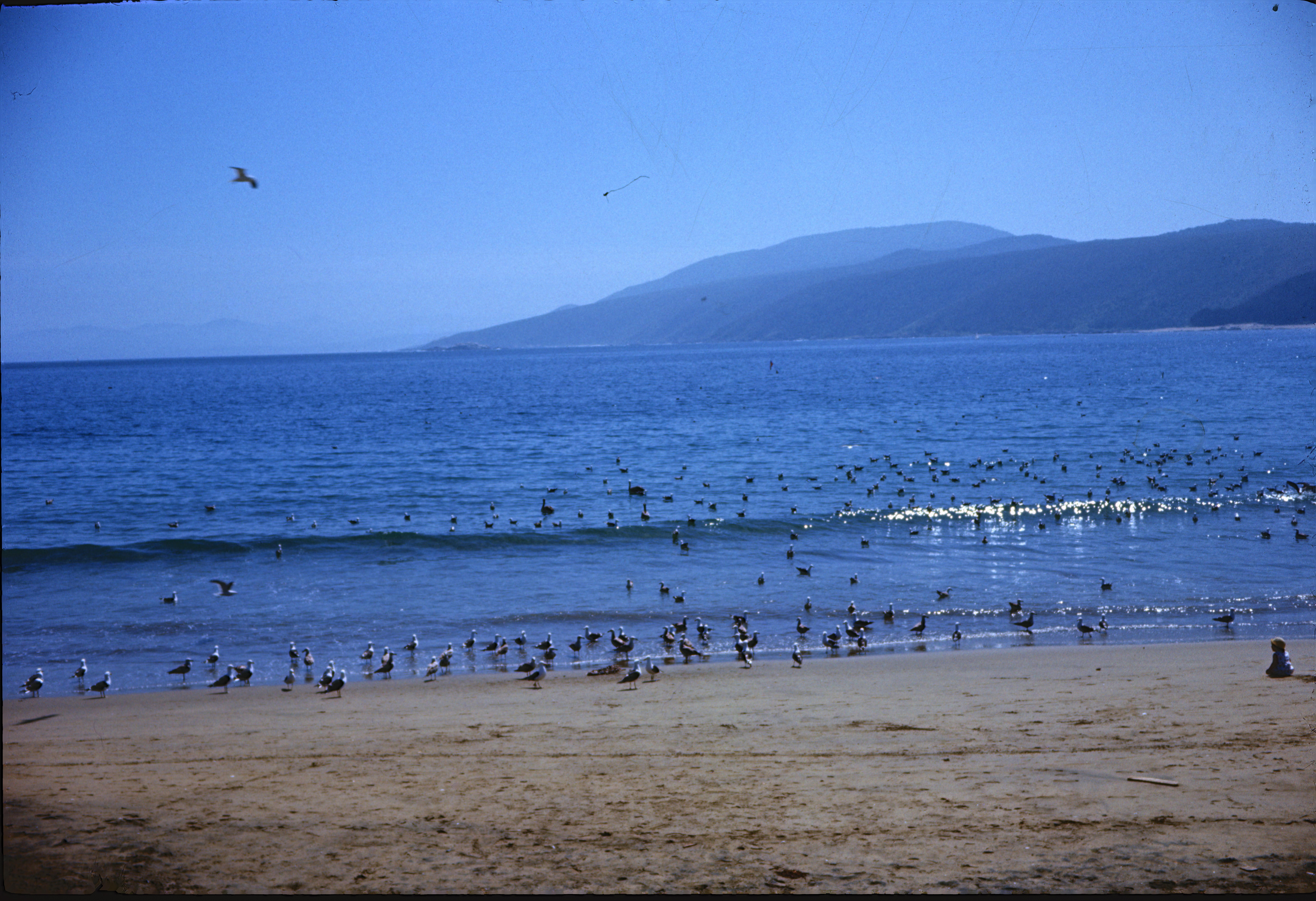 Enterreno - Fotos históricas de chile - fotos antiguas de Chile - Playa Grande de Papudo en 1968