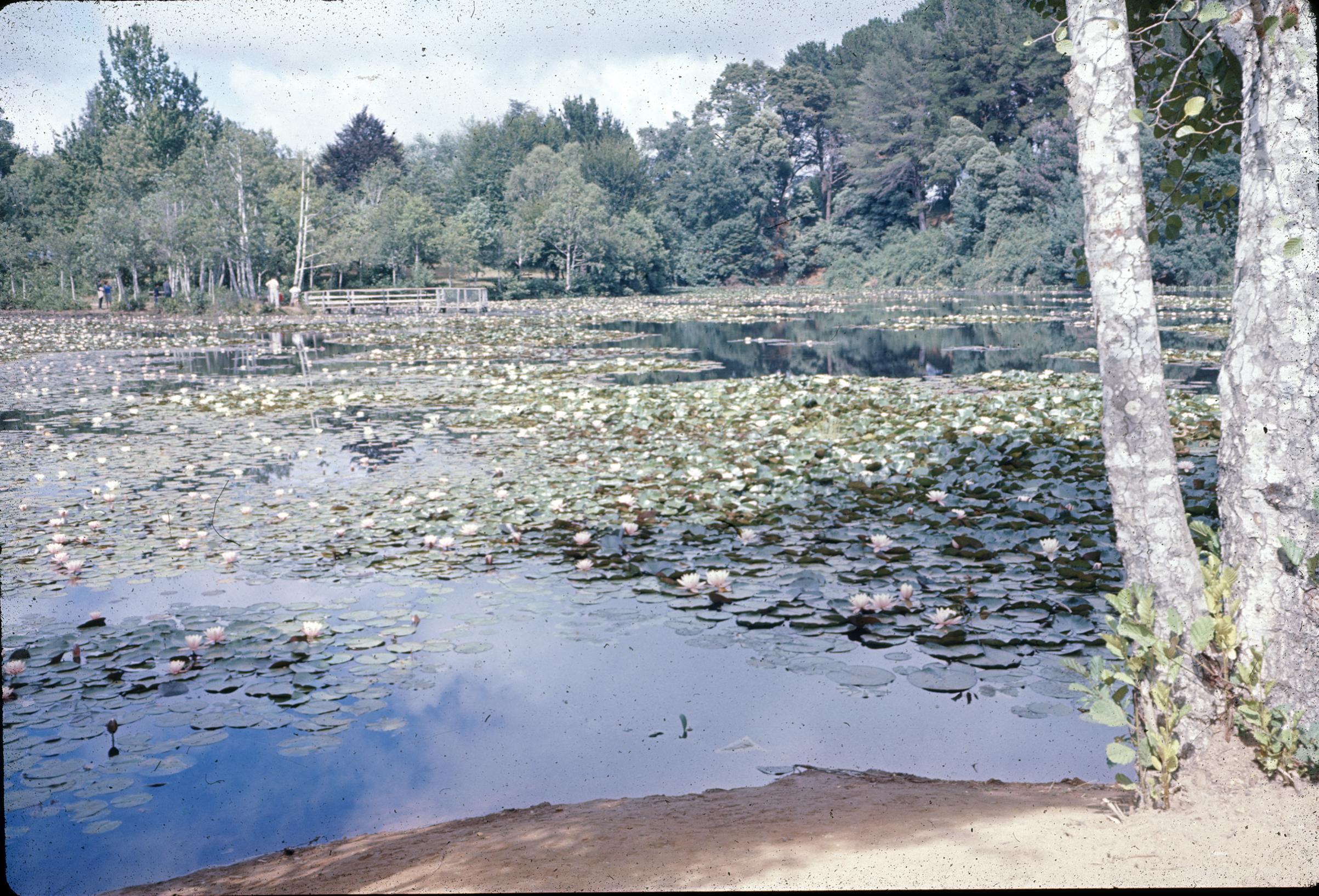 Enterreno - Fotos históricas de chile - fotos antiguas de Chile - Laguna de la flor del Loto, Parque Saval, Valdivia 1960