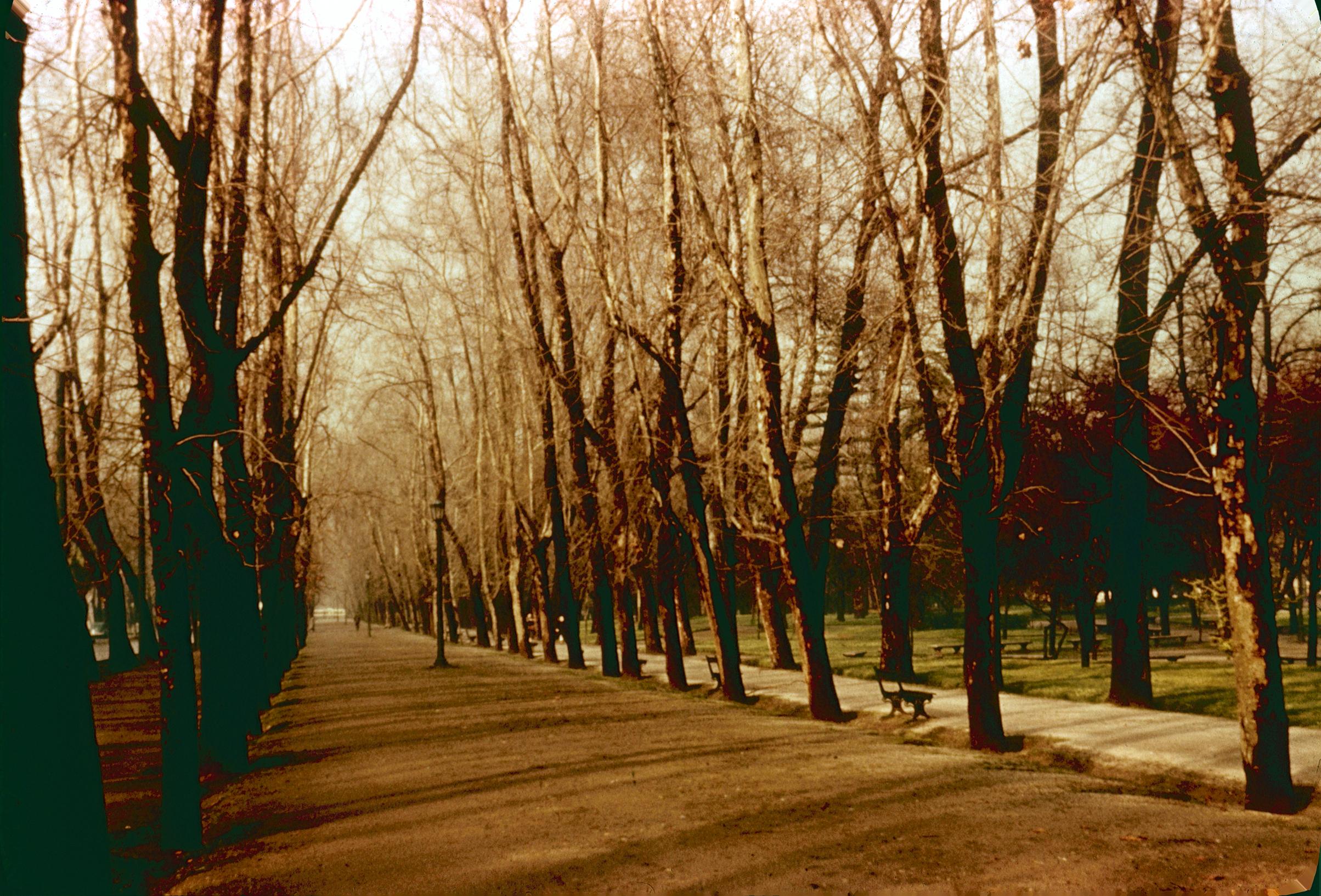 Enterreno - Fotos históricas de chile - fotos antiguas de Chile - Un paseo por el Parque Forestal en los 60´s