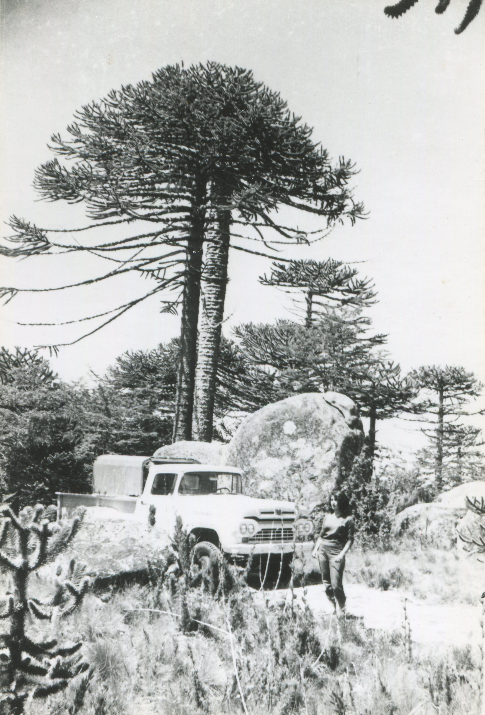 Enterreno - Fotos históricas de chile - fotos antiguas de Chile - Camioneta en Parque Nacional Nahuelbuta, años 50s