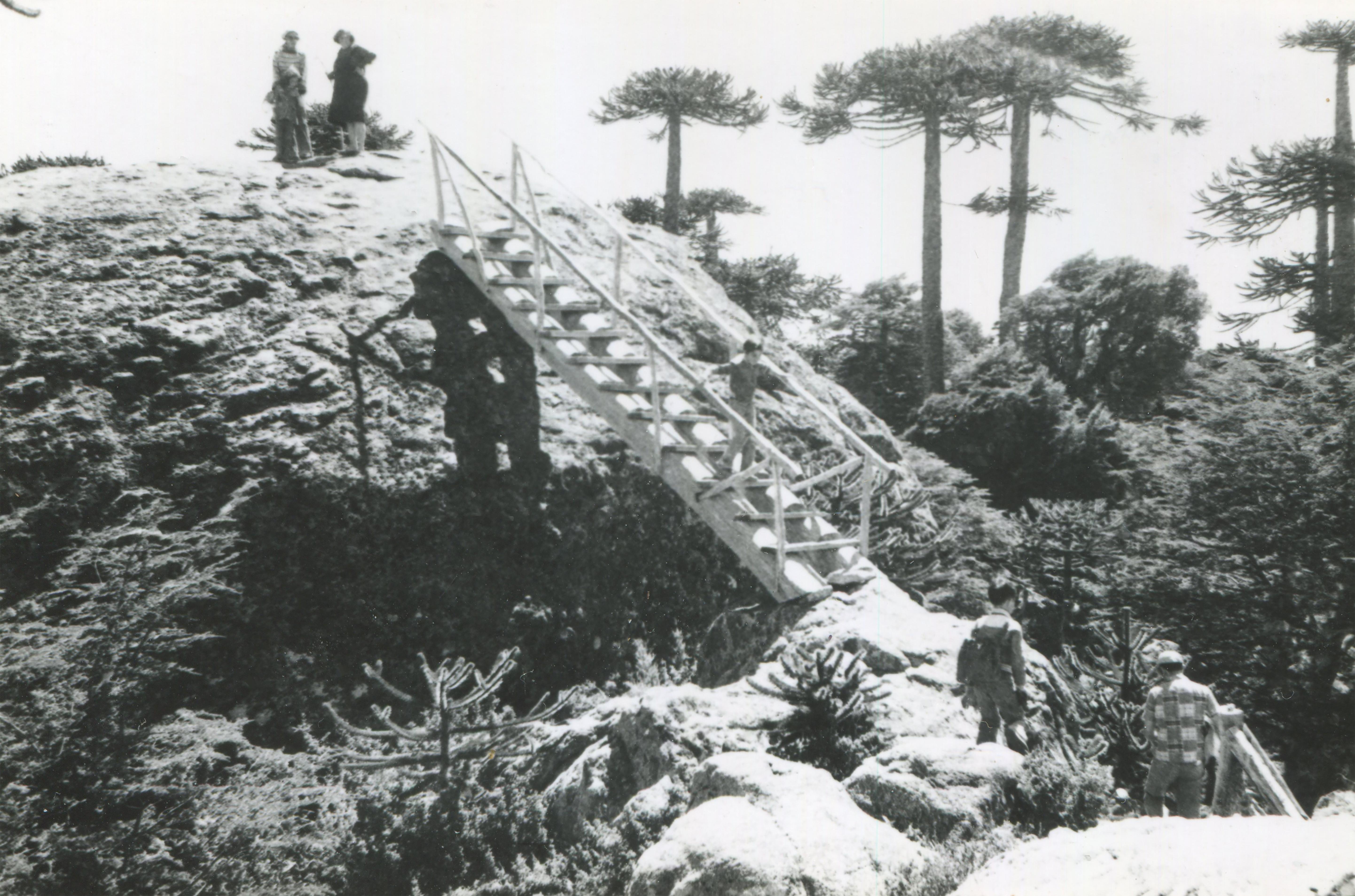 Enterreno - Fotos históricas de chile - fotos antiguas de Chile - Parque Nacional Nahuelbuta en 1950