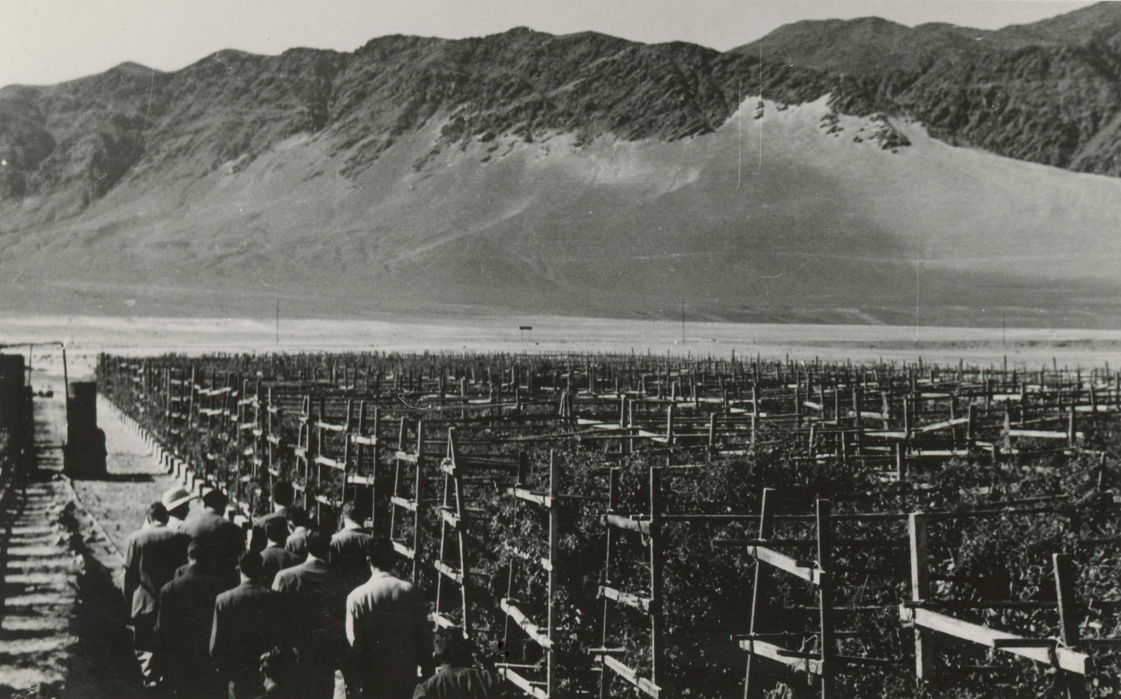 Enterreno - Fotos históricas de chile - fotos antiguas de Chile - Plantación en las cercanías de Antofagasta, 1950