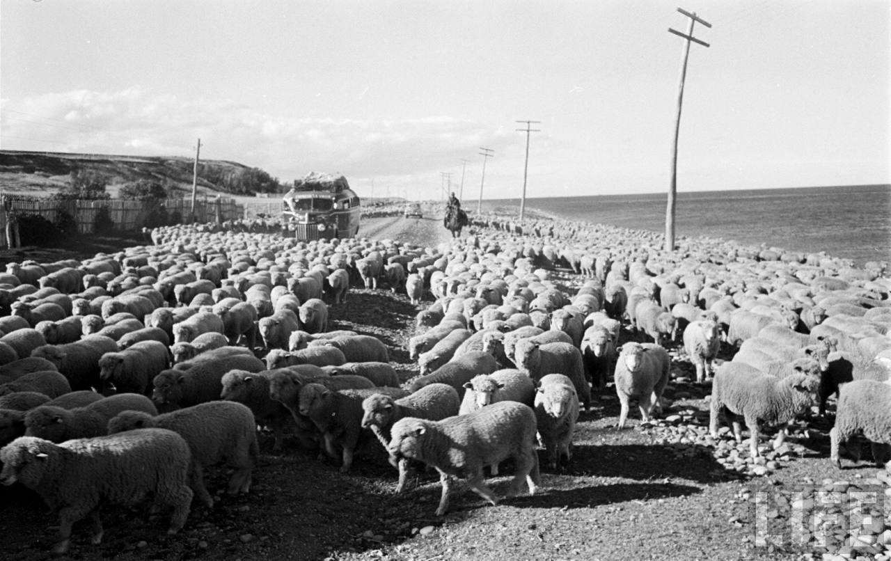 Enterreno - Fotos históricas de chile - fotos antiguas de Chile - Camino a Puerto Natales en 1950