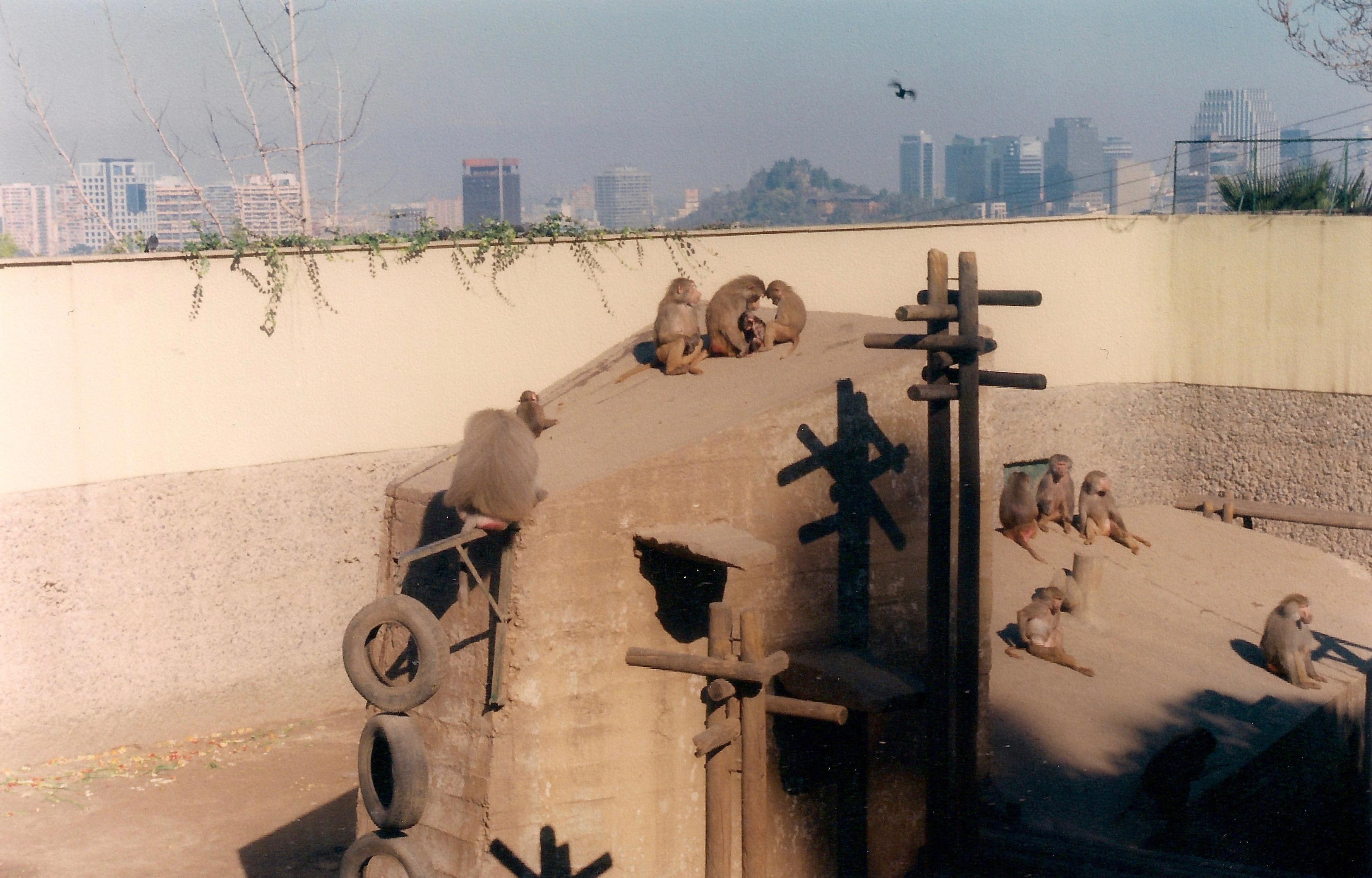 Enterreno - Fotos históricas de chile - fotos antiguas de Chile - Zoológico Nacional de Chile en 1999