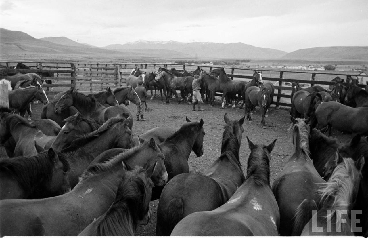 Enterreno - Fotos históricas de chile - fotos antiguas de Chile - Caballos en la Patagonia, 1950